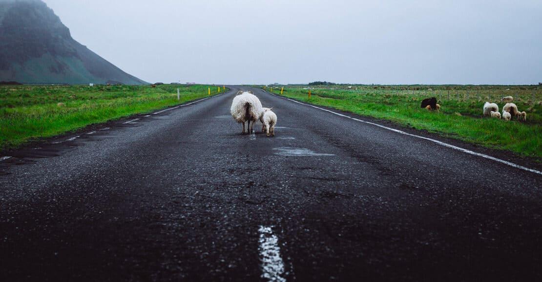 Cómo reaccionar si encuentras un obstáculo en la carretera